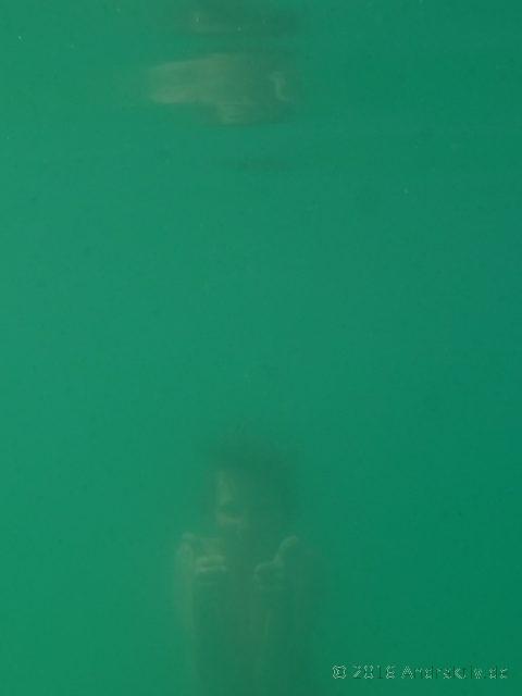 Seemonster, verschwommen