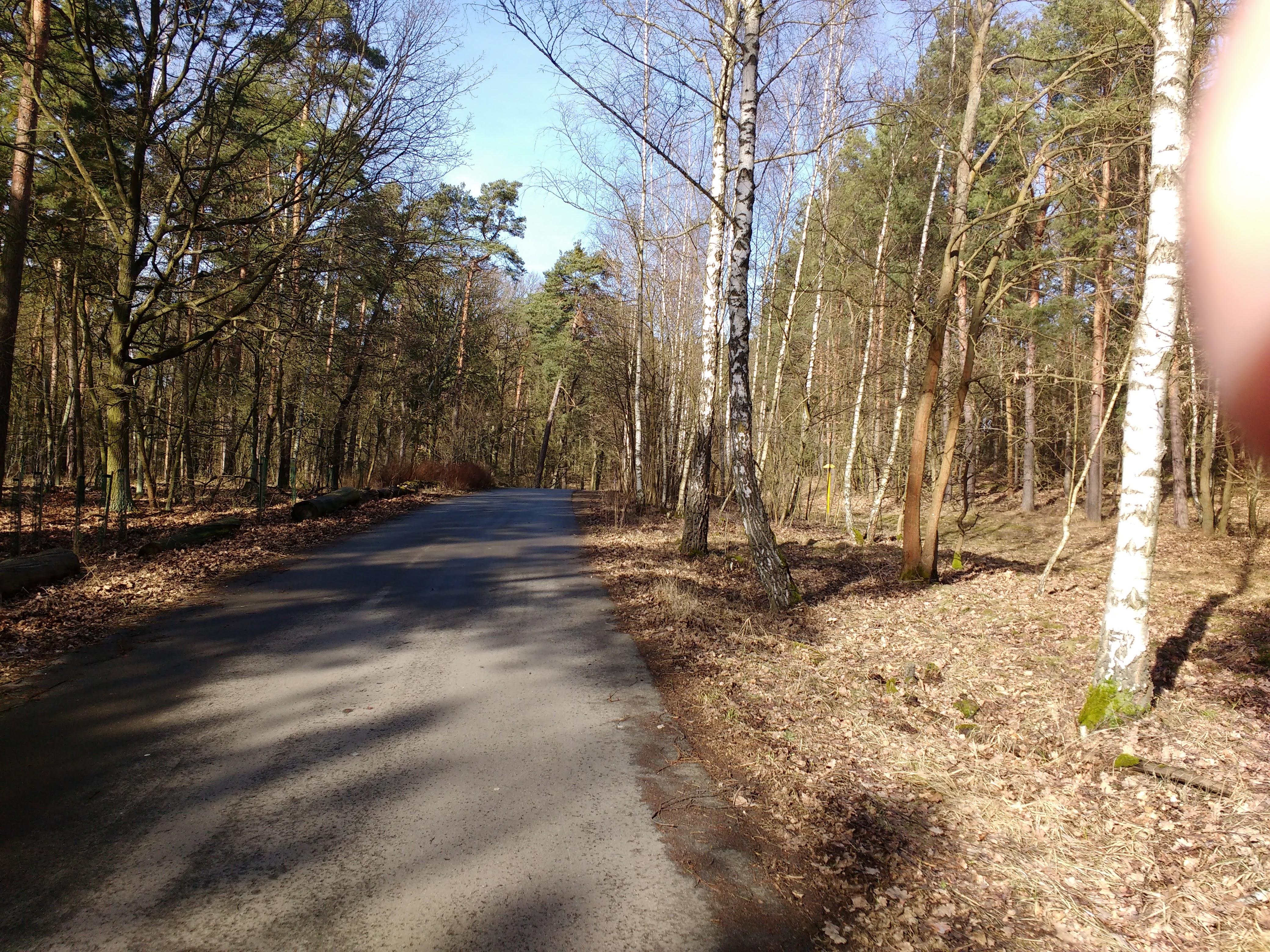 Radweg durch einen sonnigen Winterwald