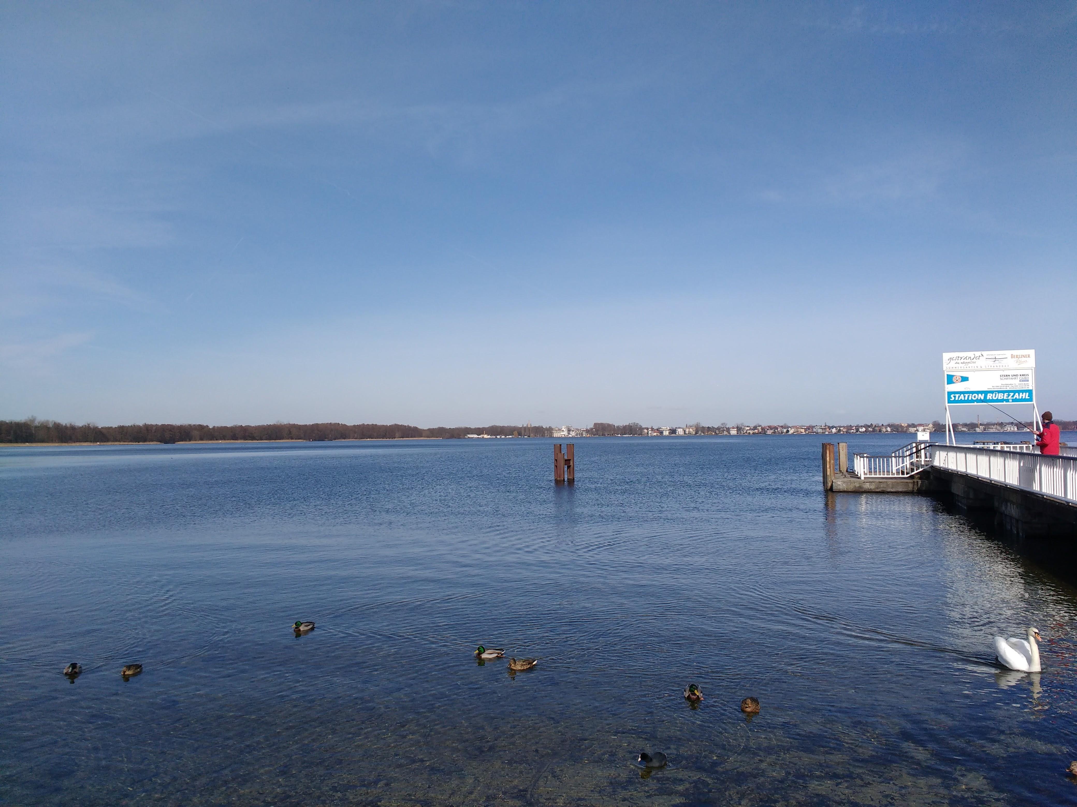 Panorama vom Seeufer mit Enten im Vordergrund