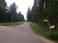 Von hinten eine Gruppe Rennräder auf einer langen Strecke durch den Wald. Das Bild ist unscharf.