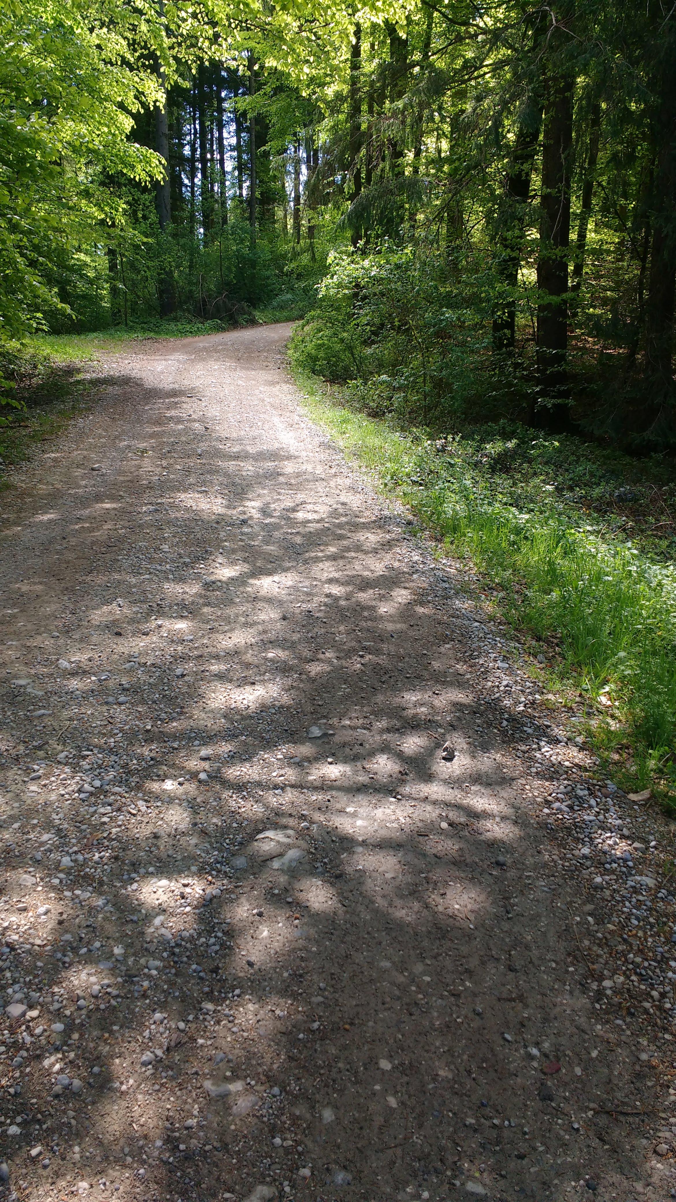 Schotterweg im Wald zwischen Geretsried und Königsdorf