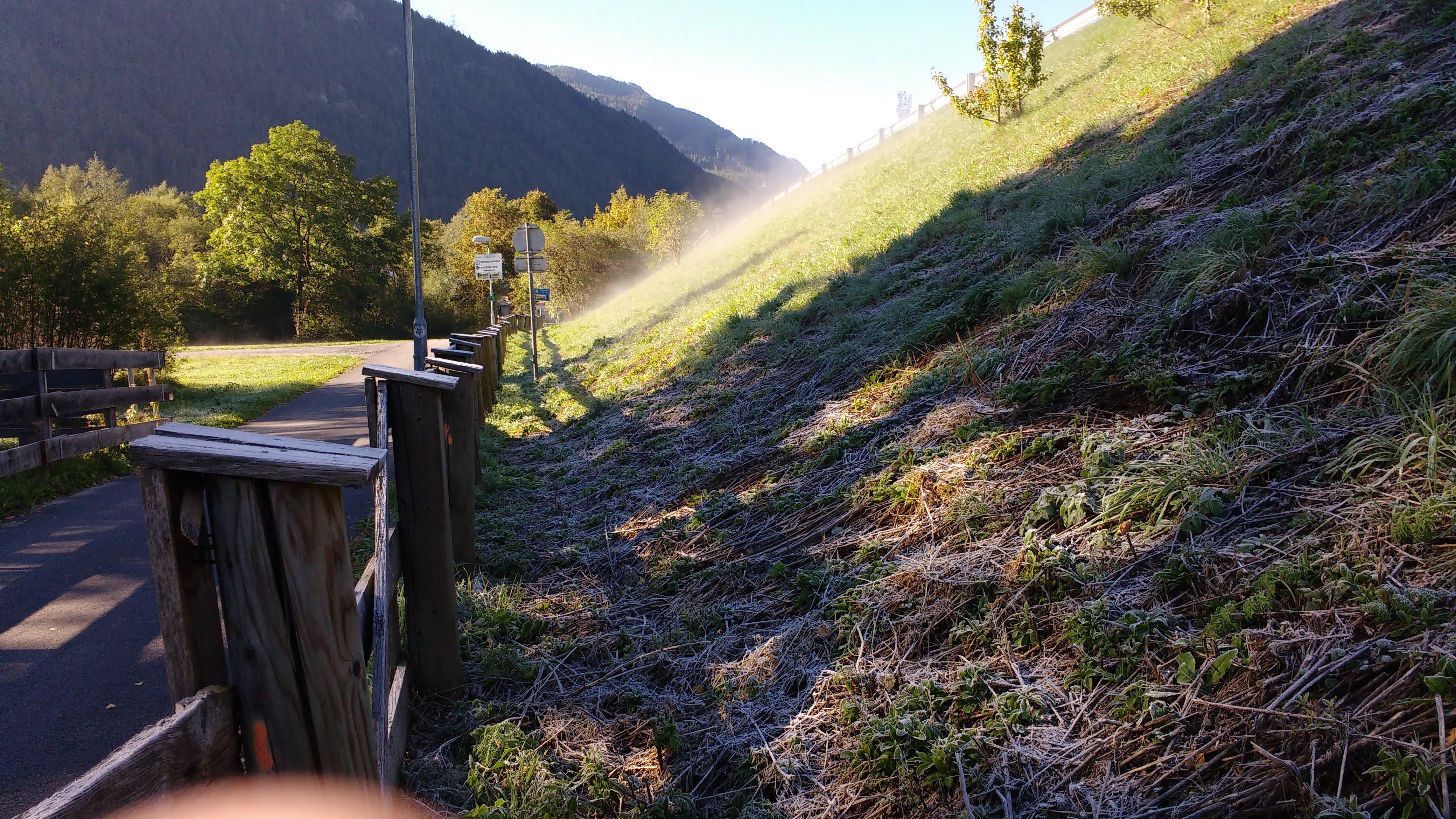 Morgennebel steigt aus der Wiese auf